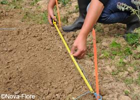 Calculez la quantité de graines à semer