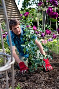 Réussissez la plantation de votre rosier grâce à nos conseils