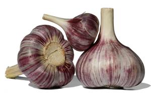 L'ail violet est une variété de printemps
