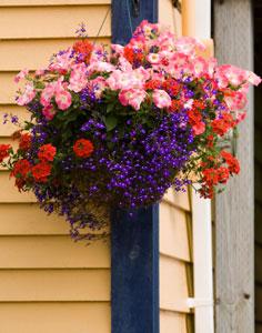 Scène fleurie à suspendre : Orange et violet