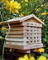 L'abri spécial abeilles solitaires