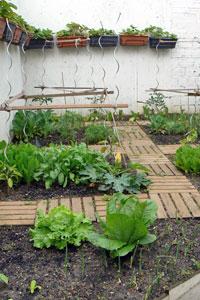 Organisation potagère pour jardin gourmand