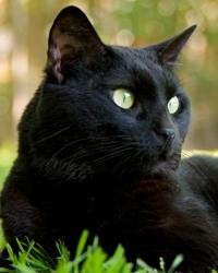 Le chat et les plantes du jardin et de la maison gamm vert - Empecher les chats de venir dans le jardin ...