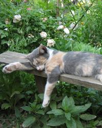 le chat et les plantes du jardin et de la maison gamm vert. Black Bedroom Furniture Sets. Home Design Ideas