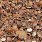 Des coques de noisettes pour un mulch déco