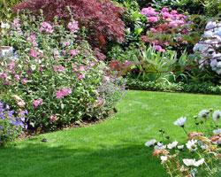 Pour un beau jardin, prenez le temps de l'observer...