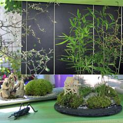 connaissez vous les kokedama gamm vert. Black Bedroom Furniture Sets. Home Design Ideas
