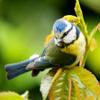 Tout sur les oiseaux au jardin