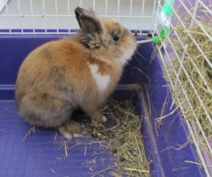 S 39 quiper pour bien vivre avec son lapin de compagnie for Abreuvoir lapin fait maison