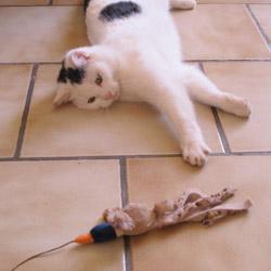 Le jeu réveille l'instinct de chasseur du chat