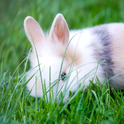Les lapins nains sont des boules de douceur