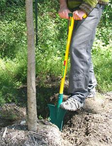 Le louchet est idéal pour transplanter les arbustes