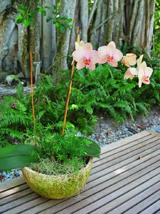 Placez votre orchidée dehors en été, à l'ombre