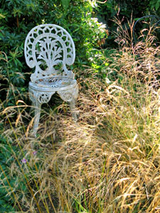 Les graminées ou herbes ornementales