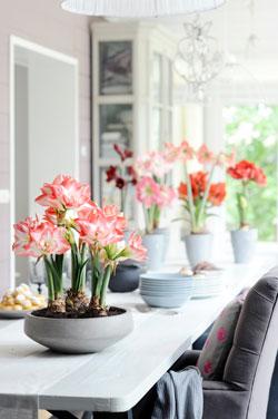 Pour des floraisons année après année, respectez une période de repos