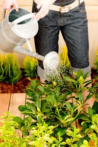 L'arrosage est vital pour les plantes
