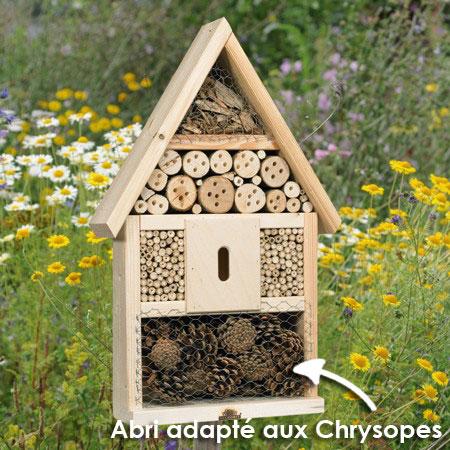 Les chrysopes trouveront leur place dans la Maison des insectes