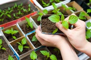 Récupérez des emballages pour vos semis