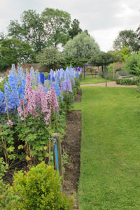 Une collection de delphiniums