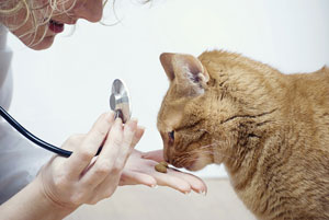 Adapter l'alimentation d'un chat stérilisé ou castré