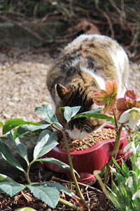 Le chat d'extérieur a besoin d'une nourriture plus riche que le chat d'intérieur