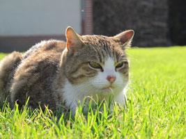 La position des oreilles et la forme des yeux en disent long sur l'état d'esprit du chat