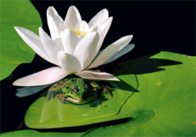 Agrémentez le bassin de plantes aquatiques