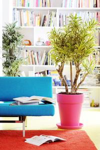 Plantes d 39 int rieur voyez xxl gamm vert for Caoutchouc plante exterieur