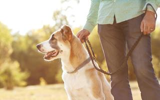 Embauchez un dogsitter qui rendra régulièrement visite à votre chien