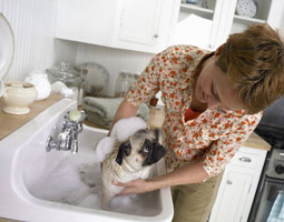 Prenez soin de l'hygiène de votre chien, dès son plus jeune âge
