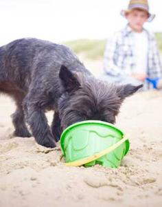 Prévénez les dangers de l'été pour votre chien