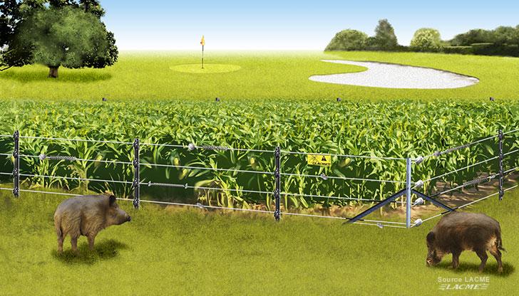Choisir sa clôture électrique pour animaux : chien