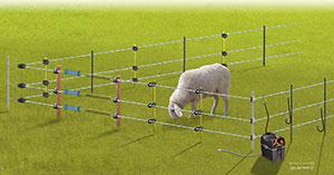 La clôture électrique pour protéger les moutons