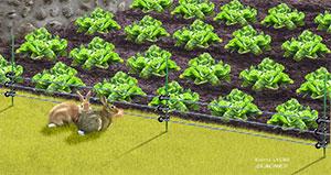 La clôture électrique contre les lapins