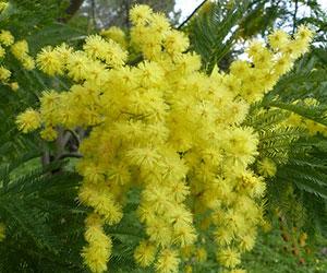 Le parfum des fleurs est un enchantement !