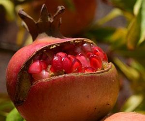 Régalez-vous des fruits de votre jardin