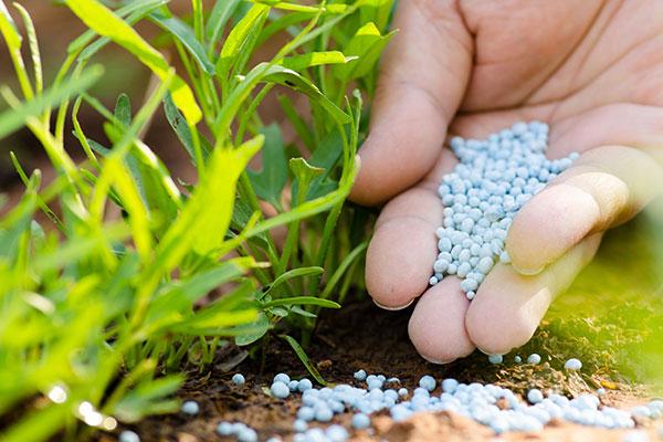 L'azote peut être apporté aux plantes et aux cultures sous forme d'engrais
