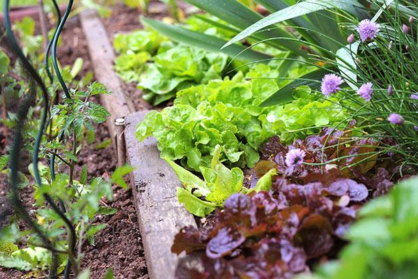 Cultiver un potager biologique