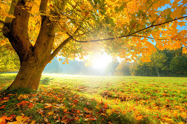 Le feuillage des arbres caducs en automne changent de couleur