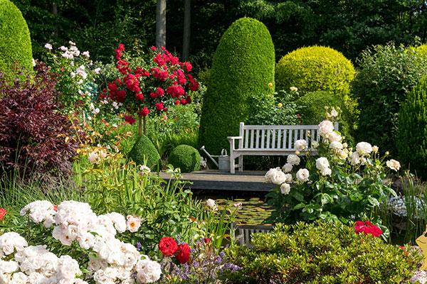 Les rosiers comptent de nombreux cultivars