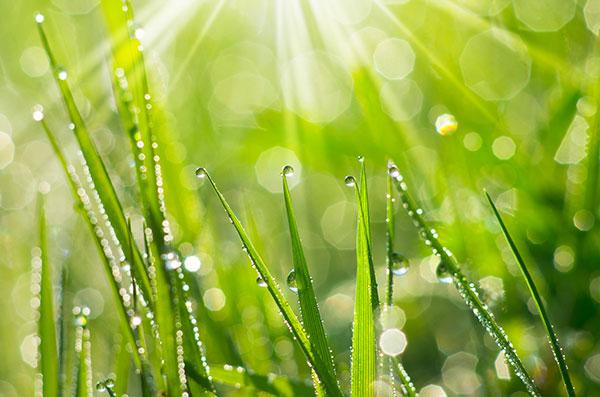 L'herbe est une herbacée