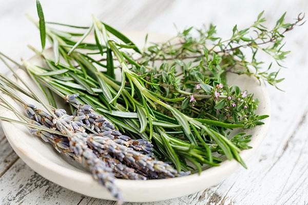 La lavande est une plante aromatique au feuillage parfumé