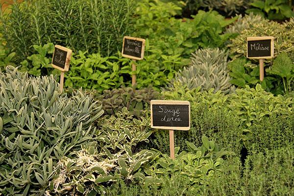 Cultivez les plantes aromatiques ensemble, elles ont les mêmes exigences de culture