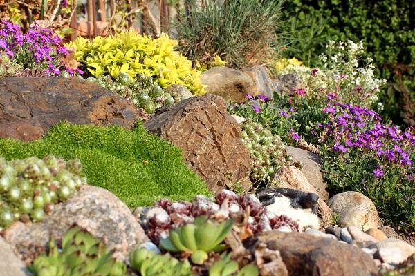 Le jardin de rocaille est composé de plantes alpines