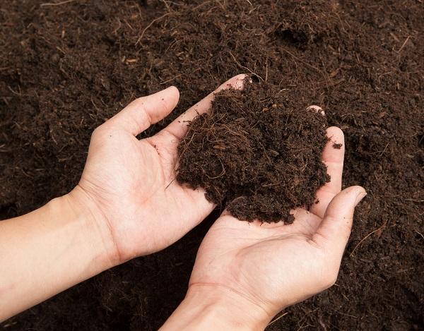 Un sol acide est noir