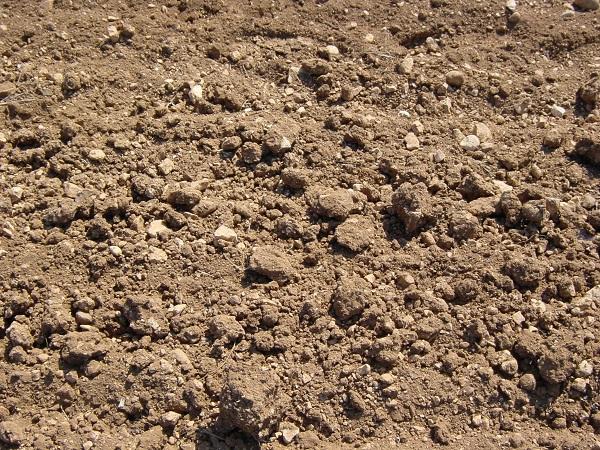 Les sols alcalins sont souvent calcaires