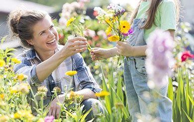 une fleur utile au potager le souci jaune plantes et jardins. Black Bedroom Furniture Sets. Home Design Ideas
