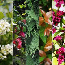 Toutes nos plantes en promotion - Plantes et Jardins