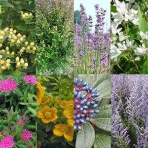 Kit de Haie Basse mixte pour 10 m – 10 pots de 2-3 litres – PLANTES ET JARDINS – Jardinerie en ligne