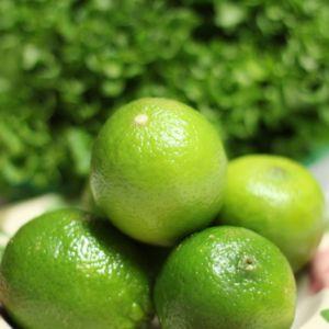 Lime 'De Tahiti' – Agrume pot de 5 litres – PLANTES-ET-JARDINS